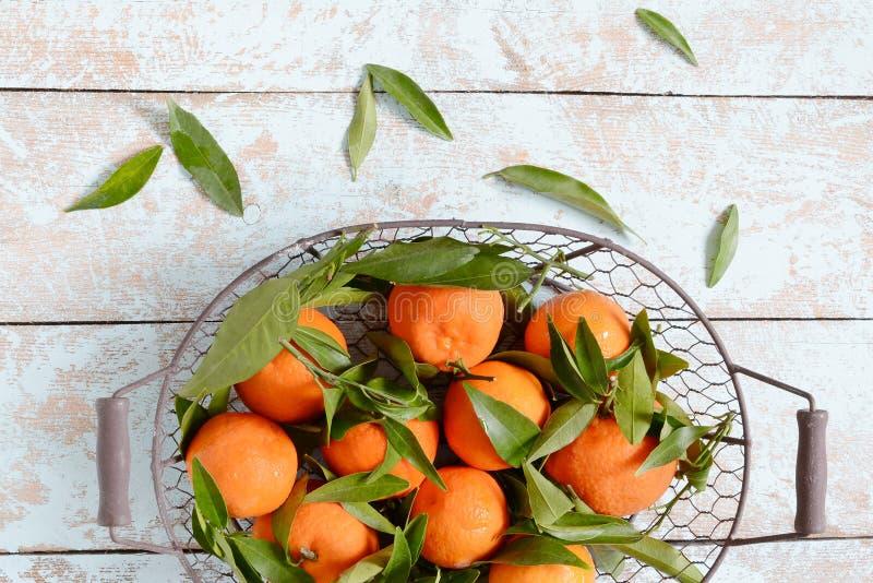 Naranjas de las mandarinas, mandarines, clementinas, agrios con las hojas en cesta en fondo gris Mandarinas imagen de archivo
