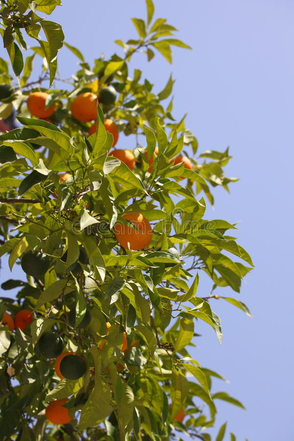 Naranjas en el cielo fotos de archivo libres de regalías