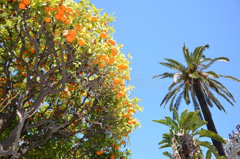 Naranjas en el jardin hermoso Albert, Niza imagenes de archivo