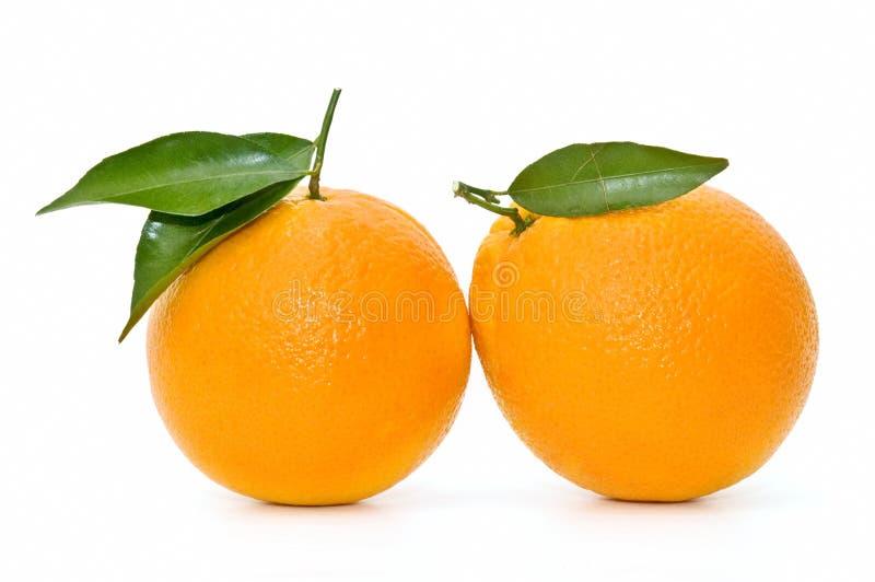 Naranjas muy frescas foto de archivo libre de regalías