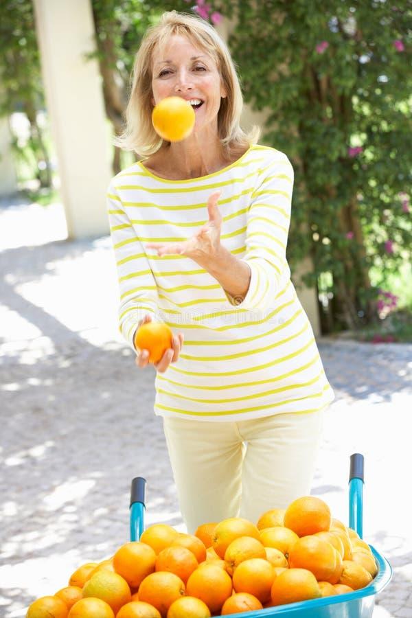 Naranjas que hacen juegos malabares de la mujer mayor de Wheelbarrow imágenes de archivo libres de regalías