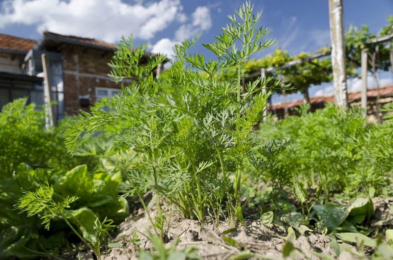 Narastający życiorys ziele i warzywa zdjęcie royalty free