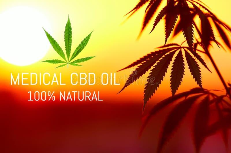 Narastającej premii medyczna marihuana, CBD nafciani konopiani produkty Naturalna marihuana zdjęcia royalty free