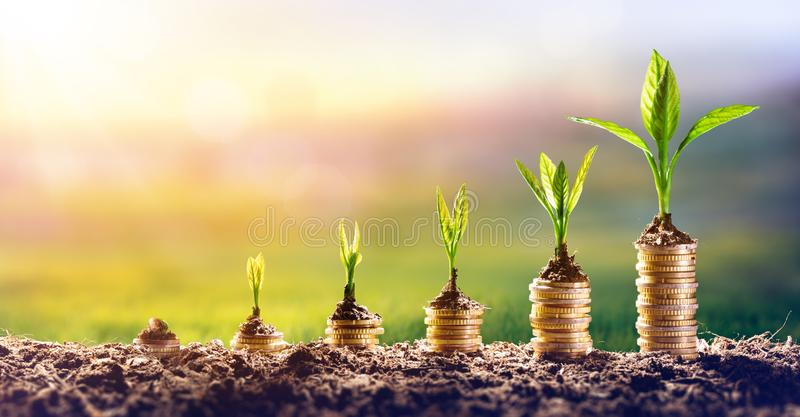 Narastający pieniądze - roślina Na monetach fotografia royalty free