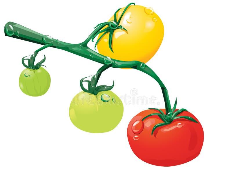 narastający pomidory royalty ilustracja