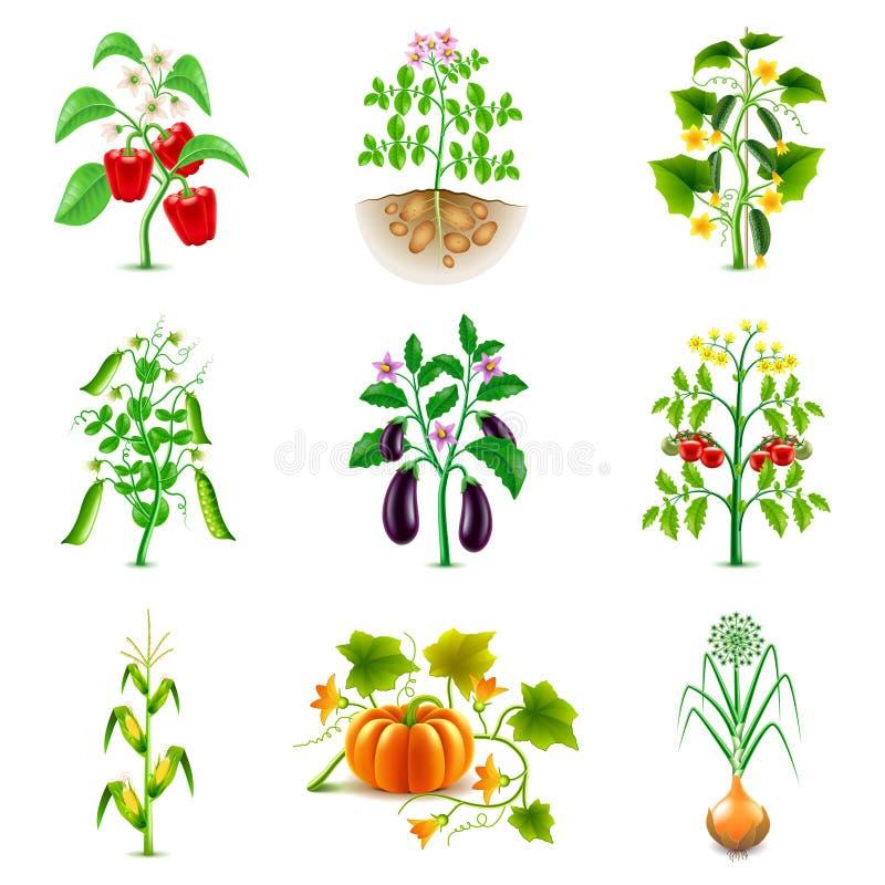 Narastający rolniczy rośliien ikon wektoru set royalty ilustracja