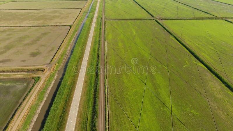 Narastający ryż na zalewających polach Dojrzali ryż w polu początek zbierać Oko widok zdjęcia royalty free