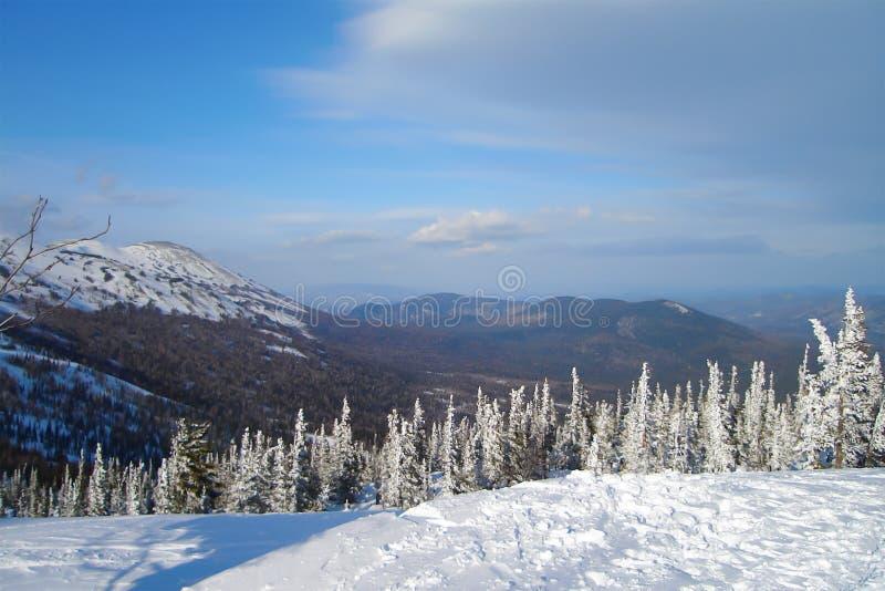 Narciarski skłon z śnieżystymi świerkowymi drzewami zdjęcia stock