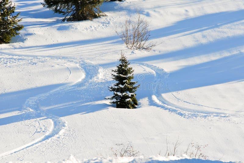 Narciarstwo tropi wokoło jedlinowego drzewa na śnieżnym skłonie obrazy stock
