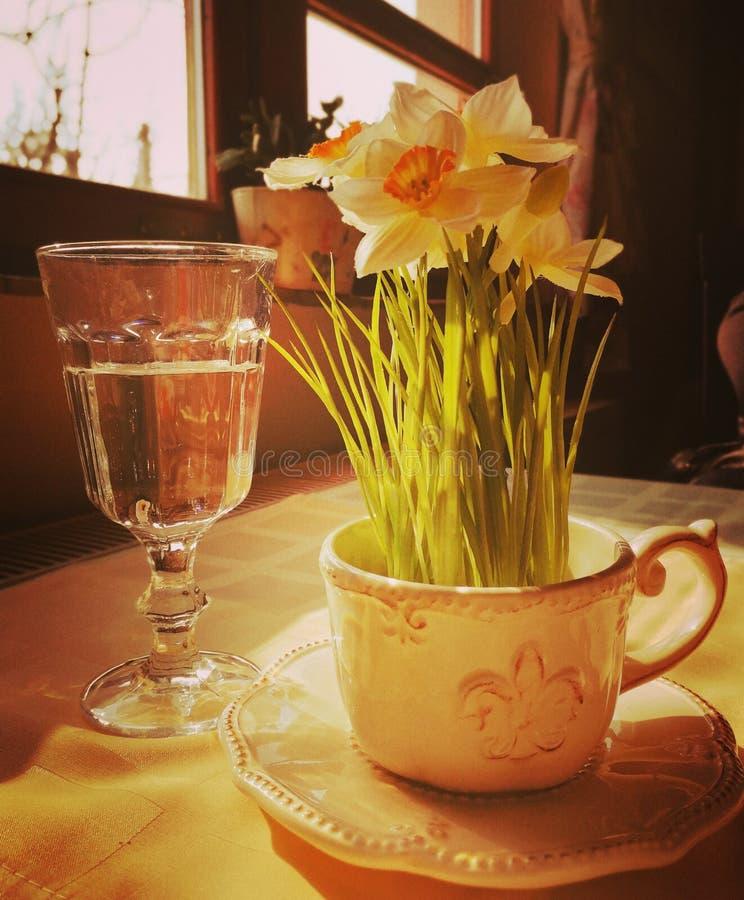 Narcisbloem en glas van wather stock afbeeldingen