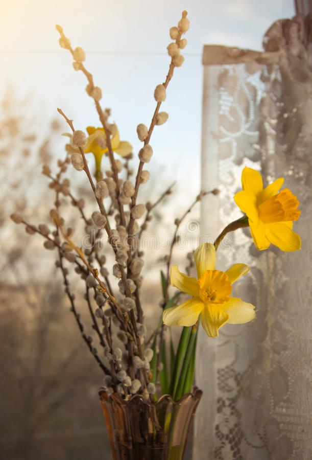 Narcisi gialli di mattina leggeri fotografia stock libera da diritti