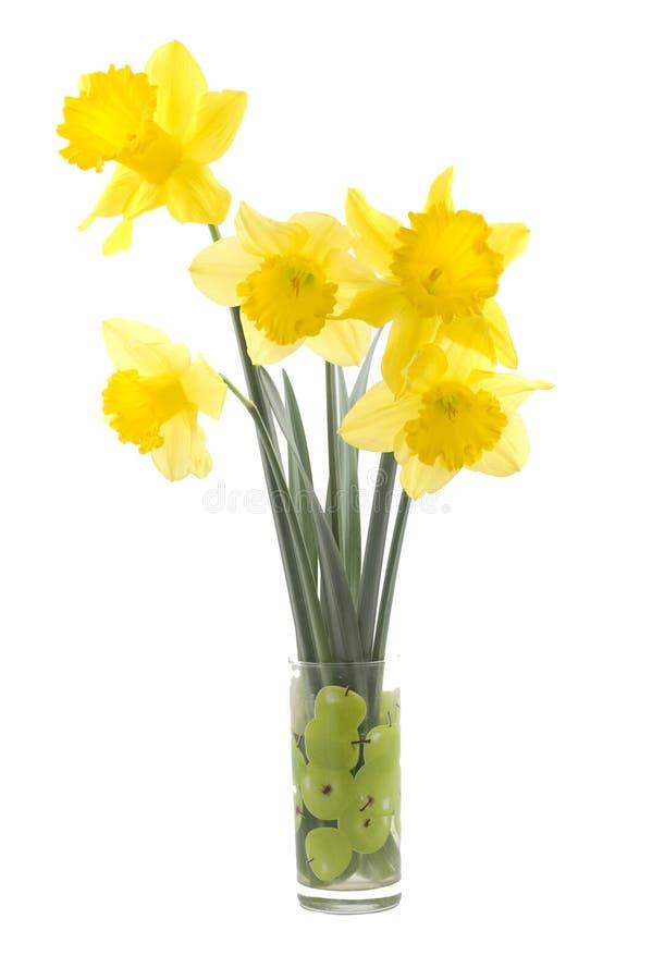 Narciso fotografia stock immagine di daffodil verde for Narciso giallo