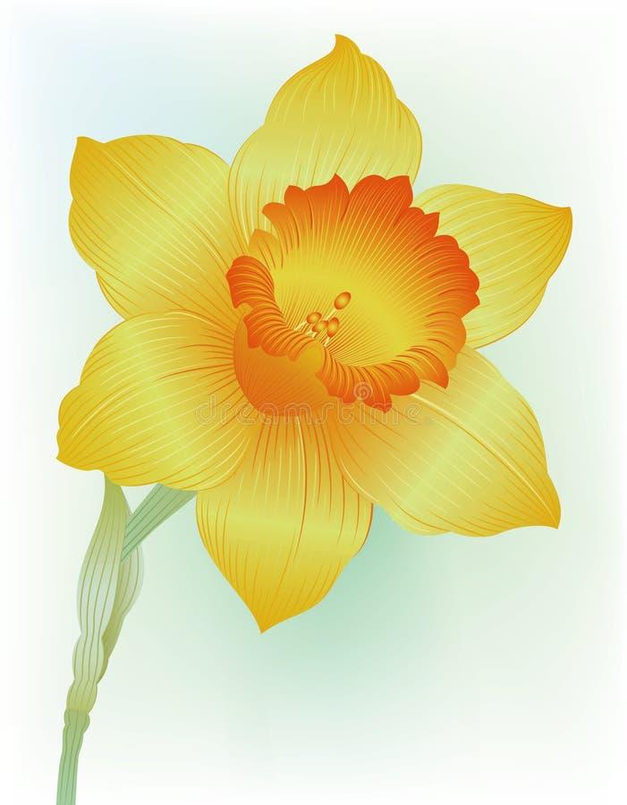Narciso ilustração stock
