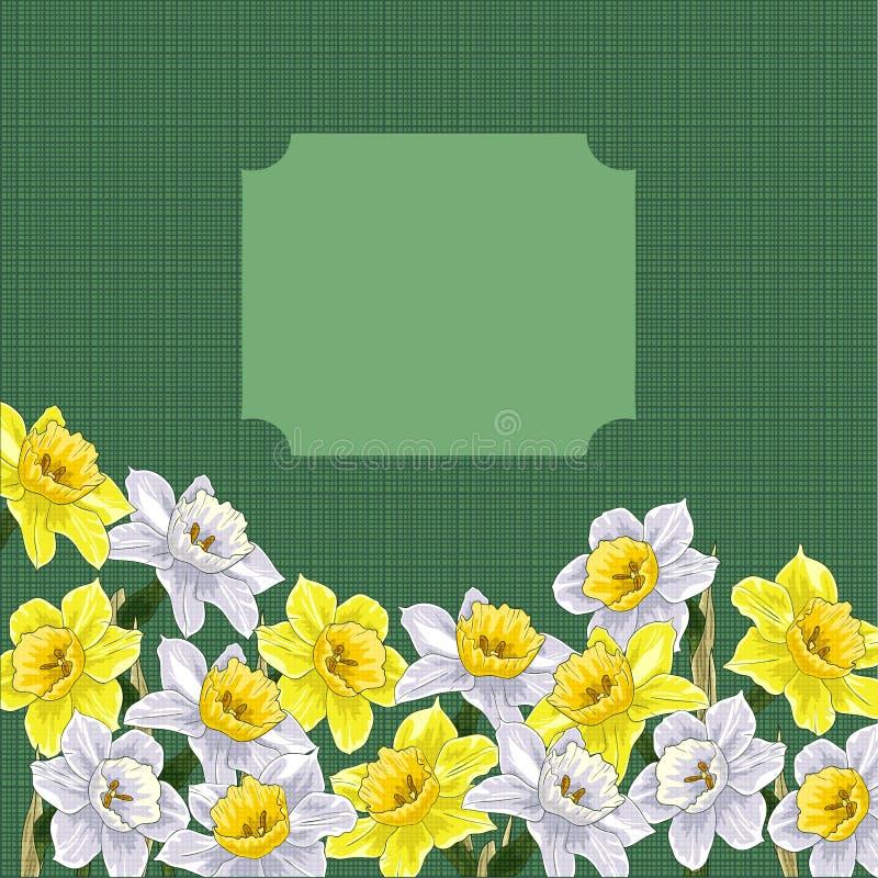 Narciso stock de ilustración