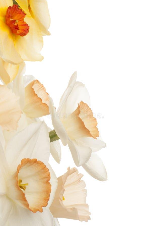 Download Narciso imagen de archivo. Imagen de flor, fondo, perfumado - 44851183