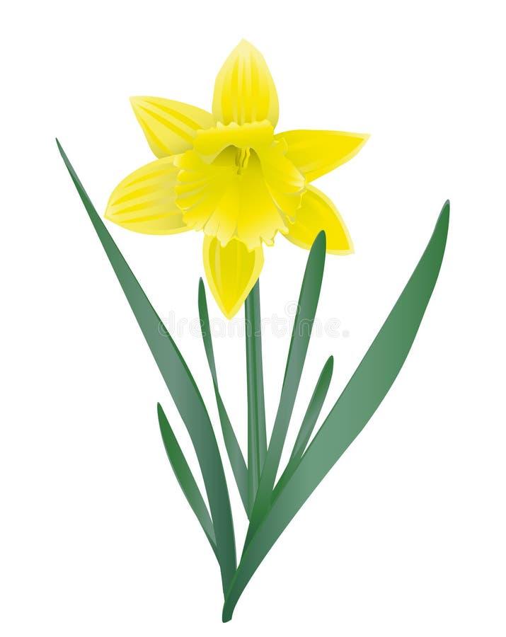 Download Narciso amarelo imagem de stock. Imagem de ninguém, amarelo - 29834771