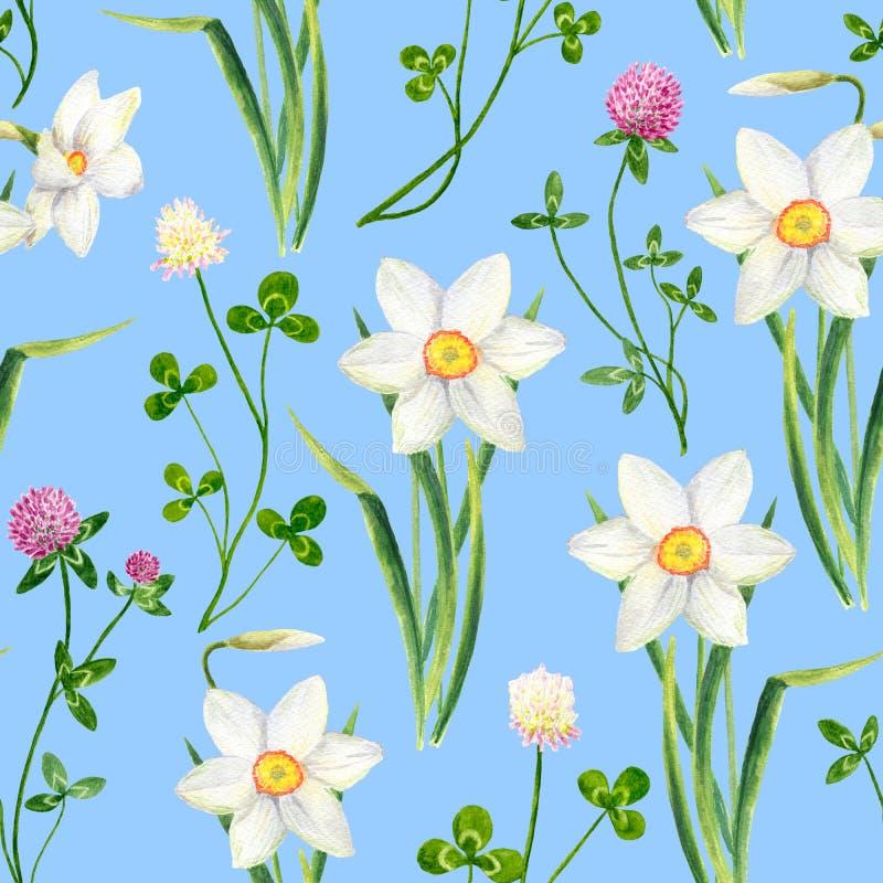 Narciso da aquarela, teste padrão sem emenda da flor do trevo Ilustração tirada mão do pratense do narciso amarelo e do trifolium ilustração stock