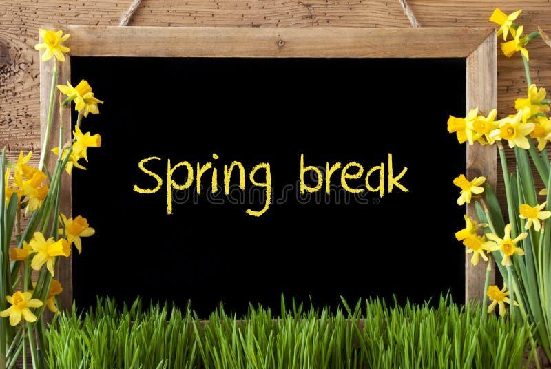 Narciso del fiore, lavagna, rottura di primavera del testo fotografie stock