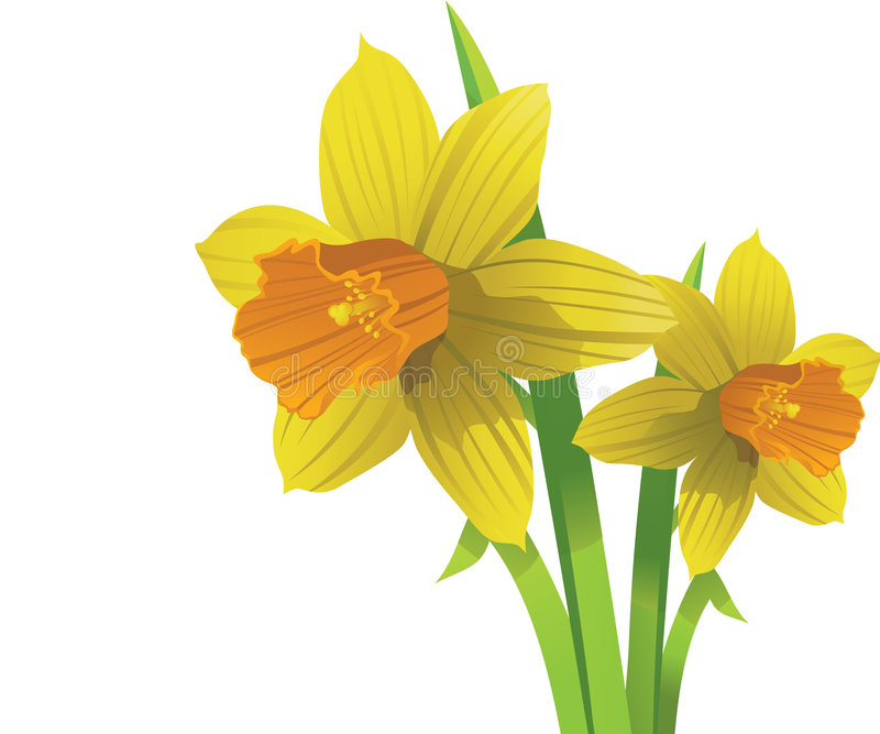 Narciso del vector. flores del resorte de pascua libre illustration