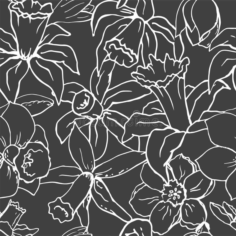 Narciso floral do whit da ilustração do vetor ilustração royalty free