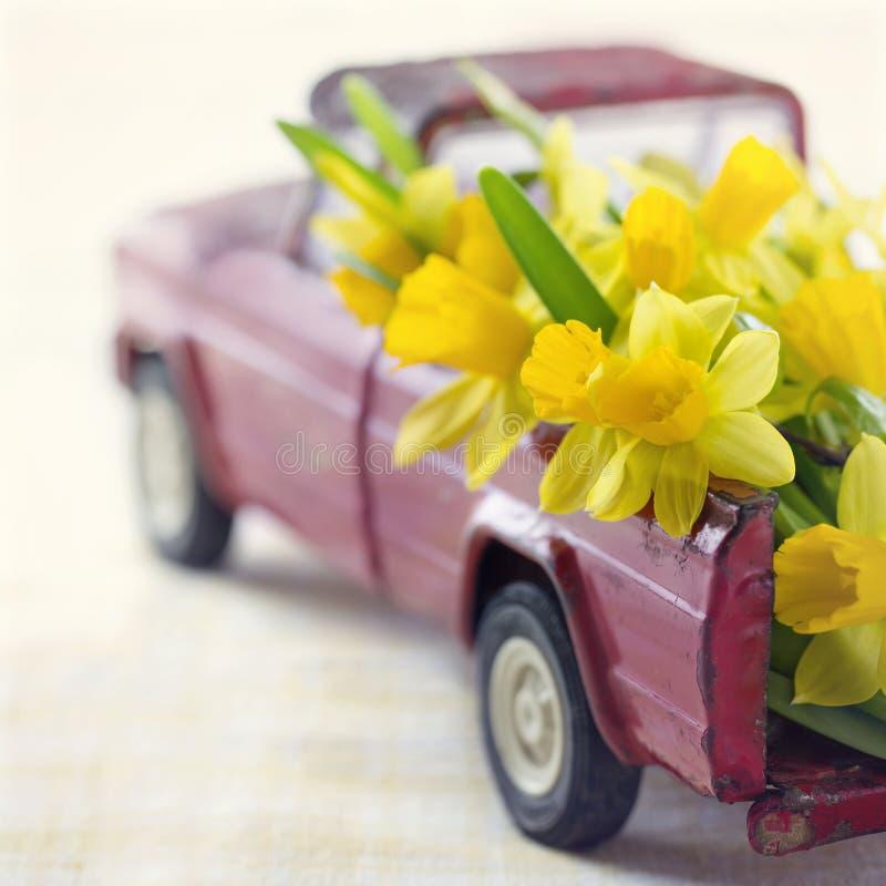 Narcisos amarelos amarelos em um caminhão vermelho do brinquedo foto de stock royalty free