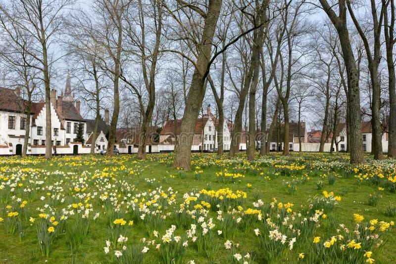 Narcisos amarelos no beguinage de Bruges fotografia de stock