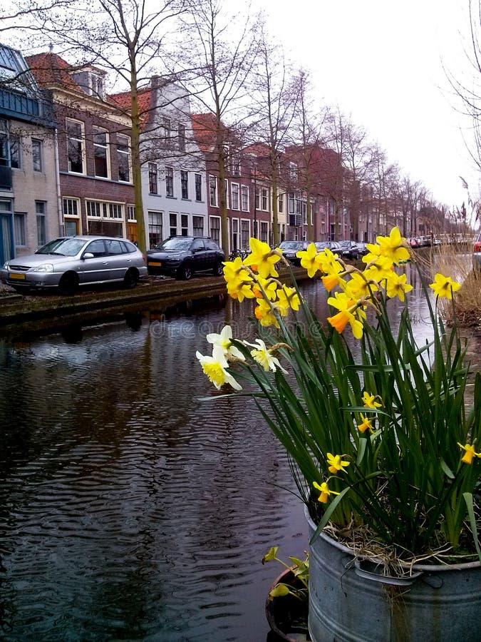 Narcisos amarillos en un cubo cerca de un canal en cerámica de Delft, los Países Bajos, en primavera Edificios en fondo foto de archivo libre de regalías