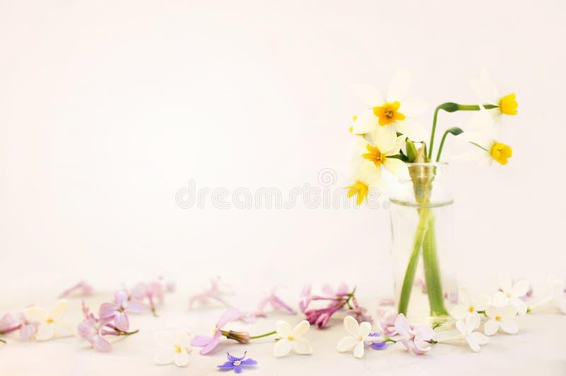 Narcisos amarillos florecientes de la primavera, flores florecientes del junquillo del narciso de la primavera en fondo en colore imágenes de archivo libres de regalías