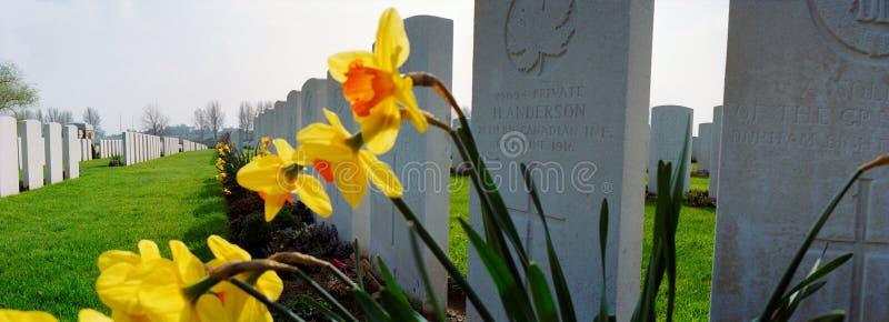 Narcisos en un cementerio militar de la primera guerra mundial imagenes de archivo