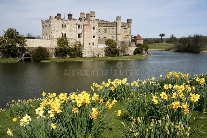Narcisos Kent del resorte de Leeds Castle imágenes de archivo libres de regalías