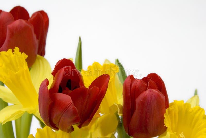 Narcisos y frontera de los tulipanes imagen de archivo