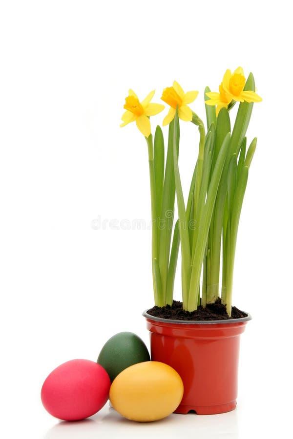 Narcisos y huevos de Pascua imagenes de archivo