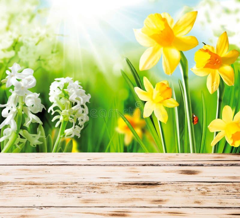 Narcisos y jacintos de la primavera fotografía de archivo