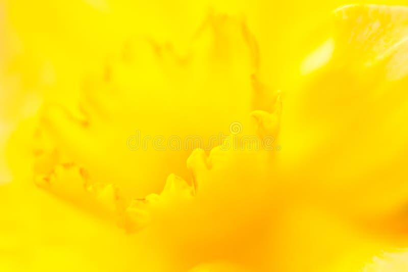 narciss цветка стоковое изображение