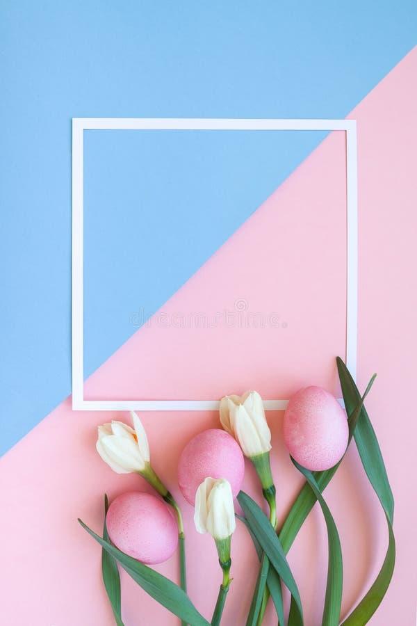 Narcissi пасхальных яя и цветков весны на розовой предпосылке стоковое фото