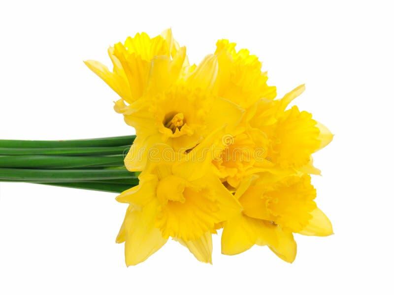 Download Narcissus stock photo. Image of season, april, seasonal - 22945198