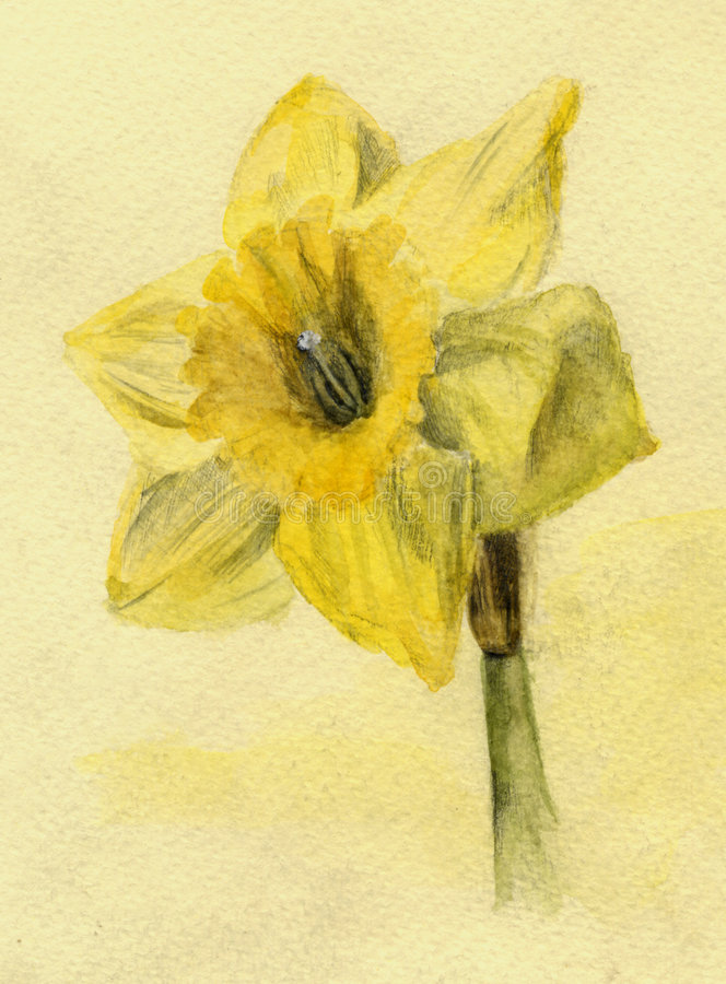Free Narcissus Royalty Free Stock Photo - 5120045
