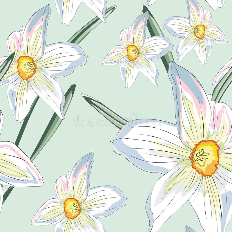 Narcissus daffodils seamless spring floral pattern. Vector Yellow and white illustration. vector illustration