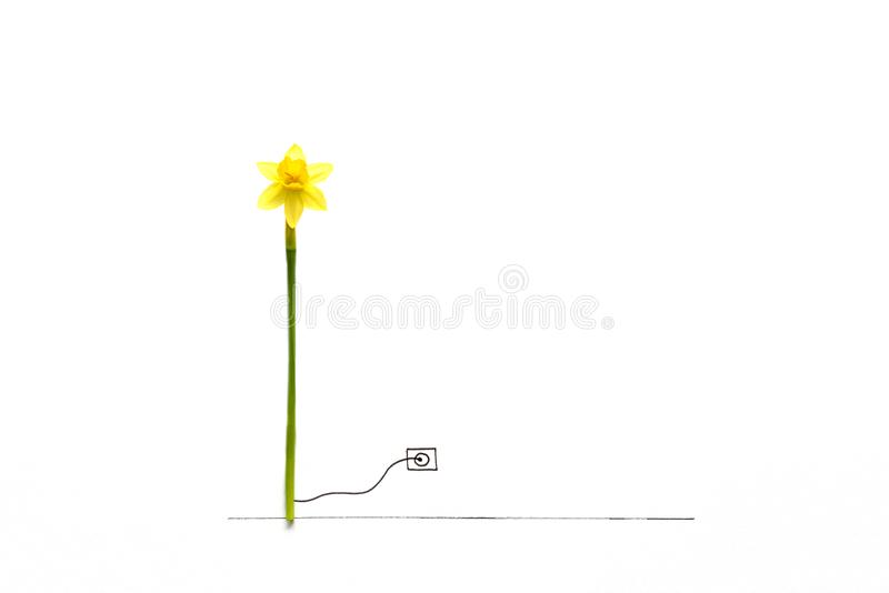 Narcissus flower associated with wind generator turbine attached to drawn electric outlet. Natural energy or creative eco concept royalty free stock photo