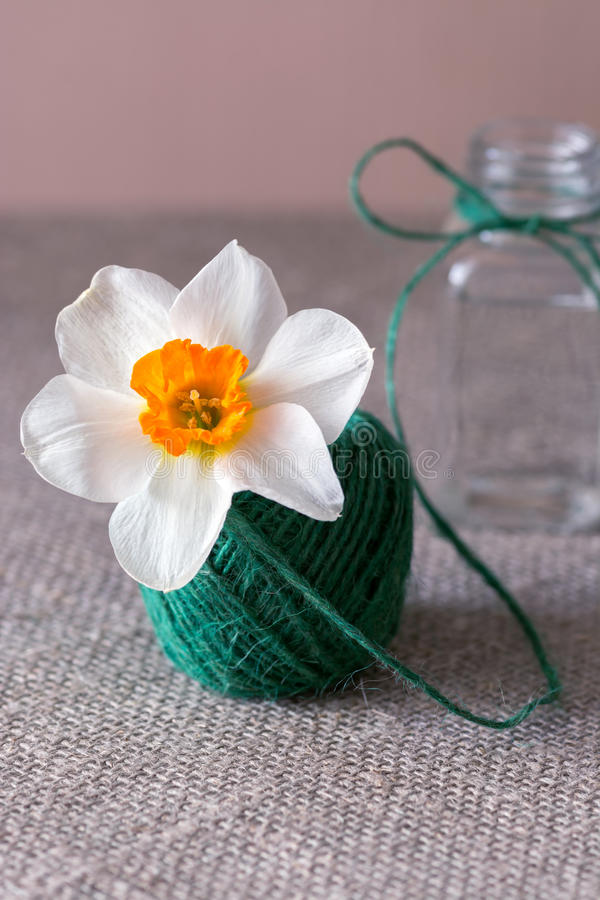 Narcissus flower in a tangle of green linen thread. Conceptual image. stock photography