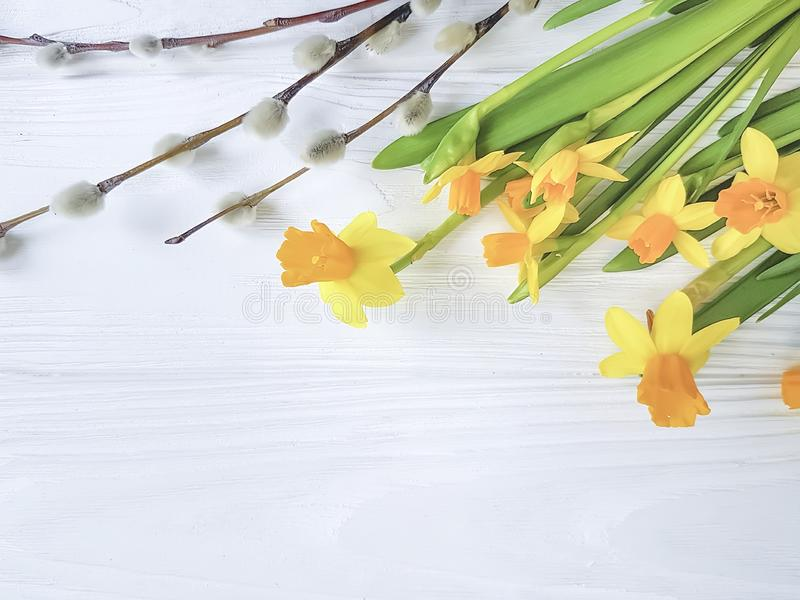 Narcissus flower fresh celebrate, fluffy willow flat lay on white wooden background. Narcissus flower on white wooden background celebrate, flat lay fresh fluffy royalty free stock photo