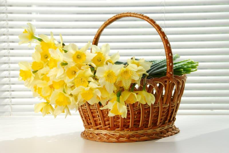 Narcyza kosz, Easter, wiosna narcyza kwiatu żółte kobiety lub matka dzień, zdjęcia royalty free