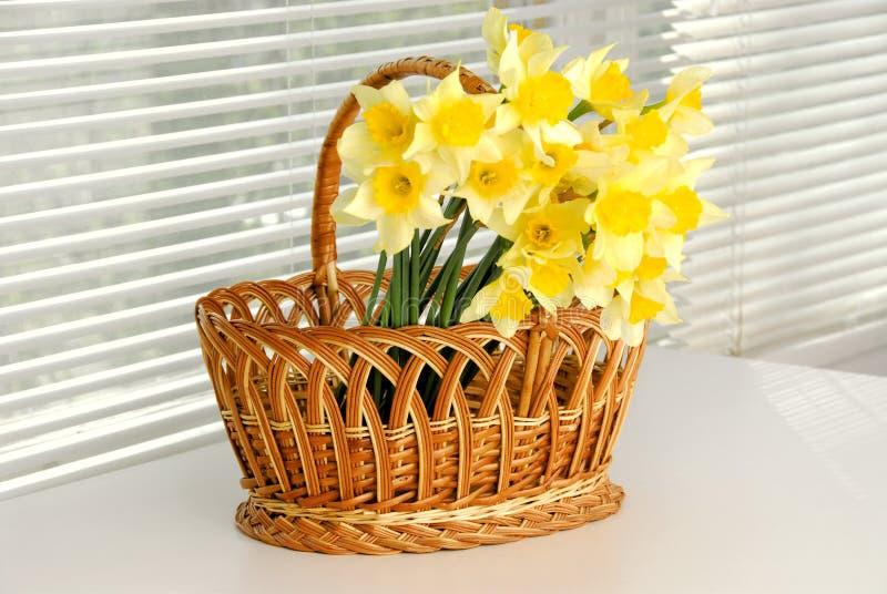 Narcyza kosz, Easter, wiosna narcyza kwiatu żółte kobiety lub matka dzień, obrazy stock