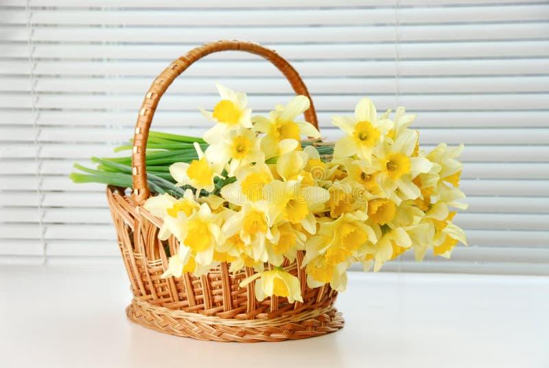 Narcyza kosz, Easter, wiosna narcyza kwiatu żółte kobiety lub matka dzień, zdjęcie royalty free