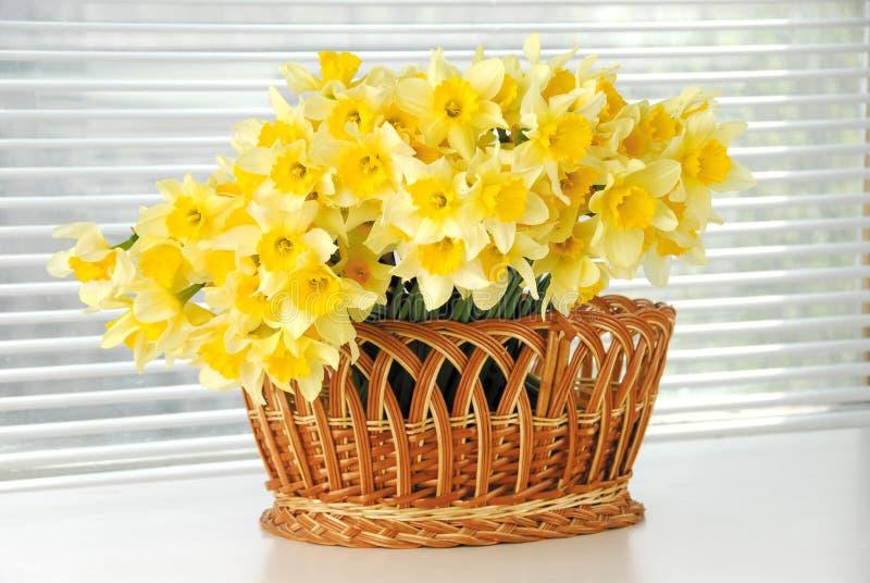 Narcyza kosz, Easter, wiosna narcyza kwiatu żółte kobiety lub matka dzień, zdjęcie stock