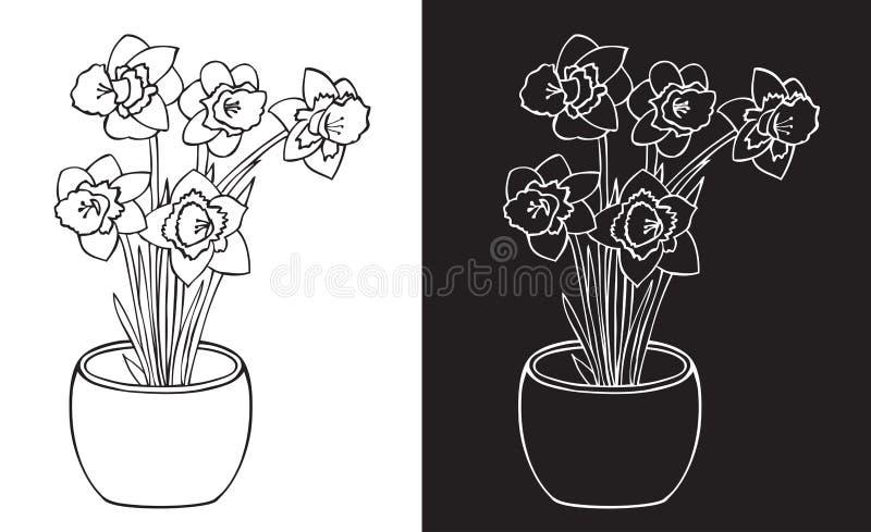 Narcyza kwiat w garnku ilustracja wektor