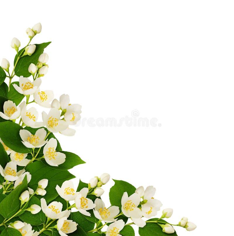 Narożnikowy przygotowania z jaśminów liśćmi i kwiatami obraz royalty free