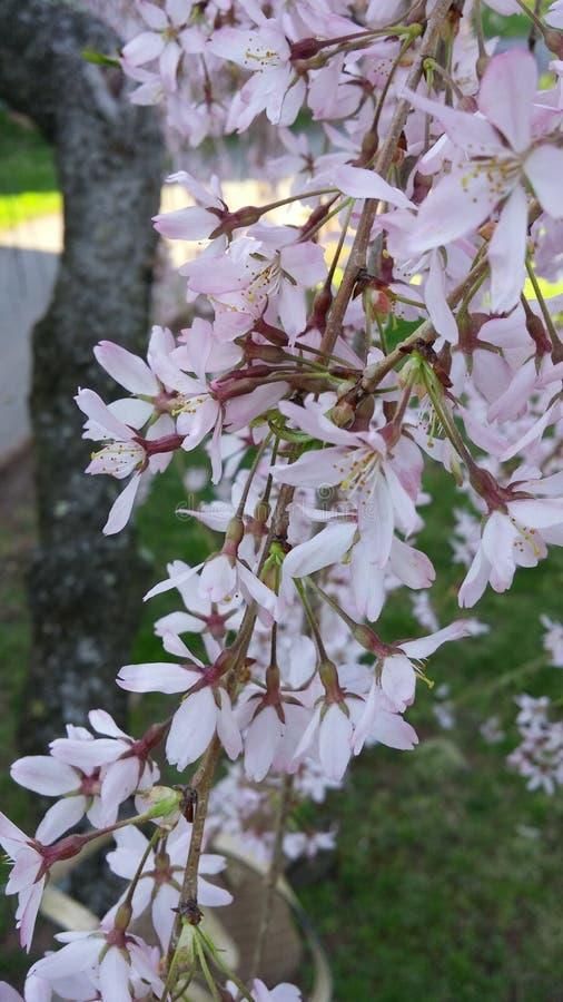 Narodziny wiosna obrazy royalty free