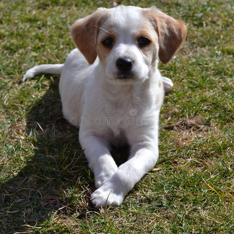 Немногое собака стоковое фото rf