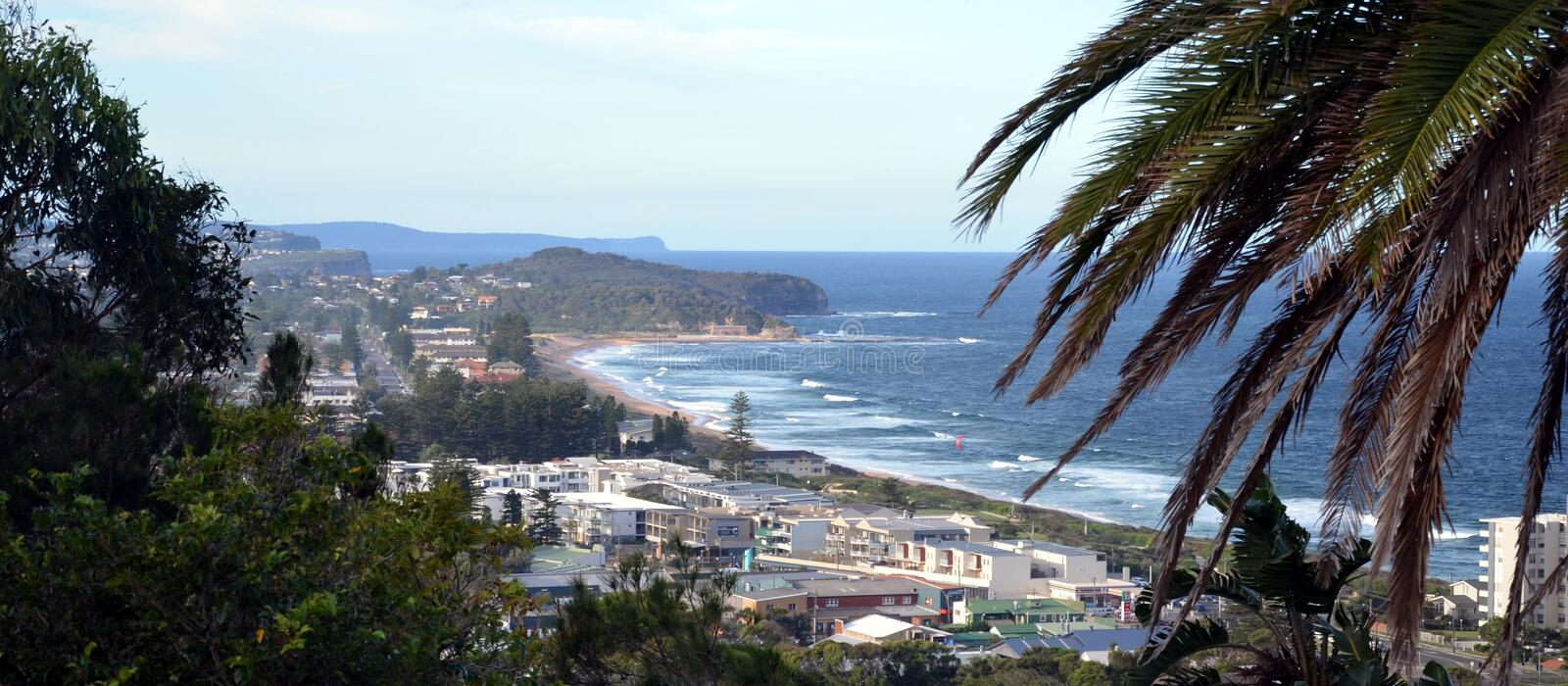 Narrabeen beach from Collaroy Plateau. (Sydney, NSW, Australia). Palm Tree in the foreground royalty free stock photos